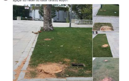 Gezi Parkında ağaçları kestiler!
