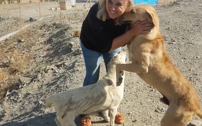 Yazar Esma Arslan, zehirli iğnelerle topluca katledilen sokak hayvanlarını yazdı!
